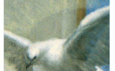 L'esprit de Dieu vint sur le prophète païen Balaam – Lundi 12 décembre