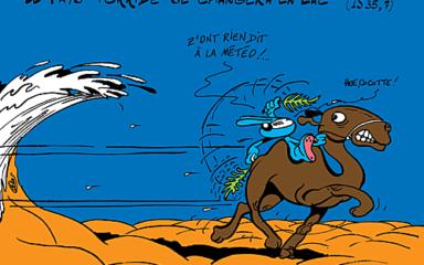 J'en connais un qui va surfer en chameau…