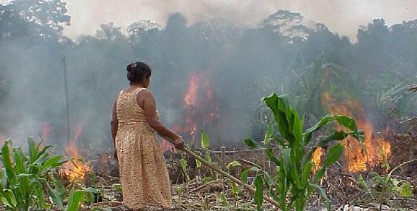 Agriculture familiale, Brésil : un an après…